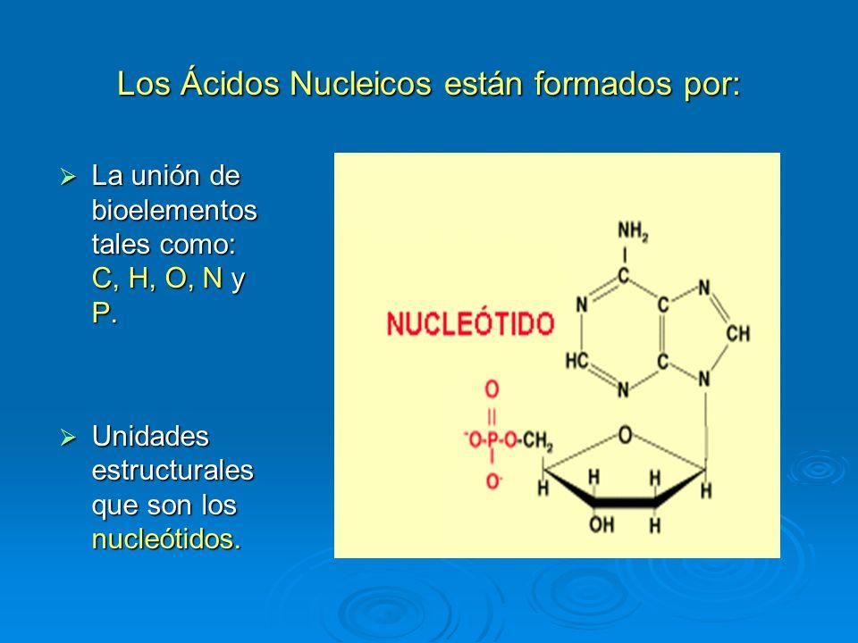 Acidos nucleicos ppt descargar for Como estan formados los suelos