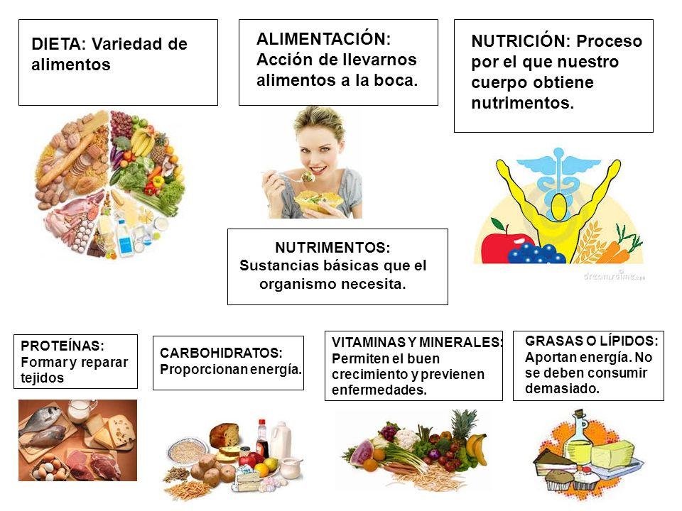 NUTRIMENTOS: Sustancias básicas que el organismo necesita.