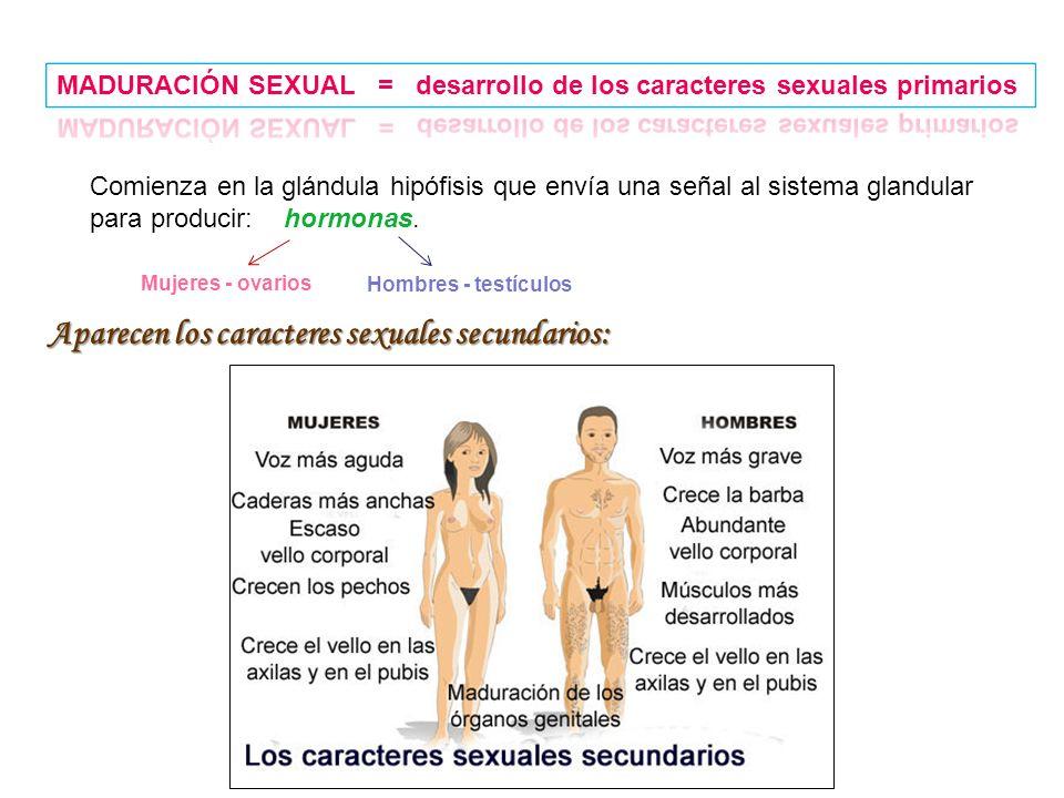 Aparecen los caracteres sexuales secundarios: