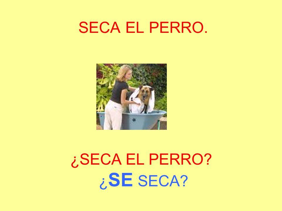 SECA EL PERRO. ¿SECA EL PERRO ¿SE SECA