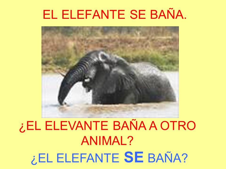 ¿EL ELEVANTE BAÑA A OTRO ANIMAL ¿EL ELEFANTE SE BAÑA