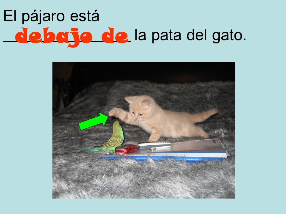 El pájaro está ________________ la pata del gato.