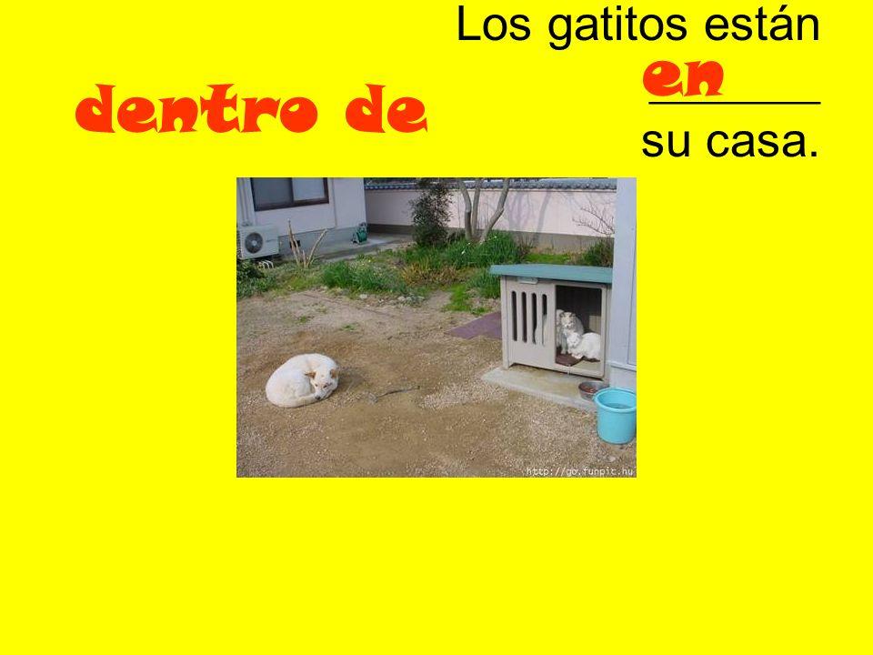 Los gatitos están _______ su casa.