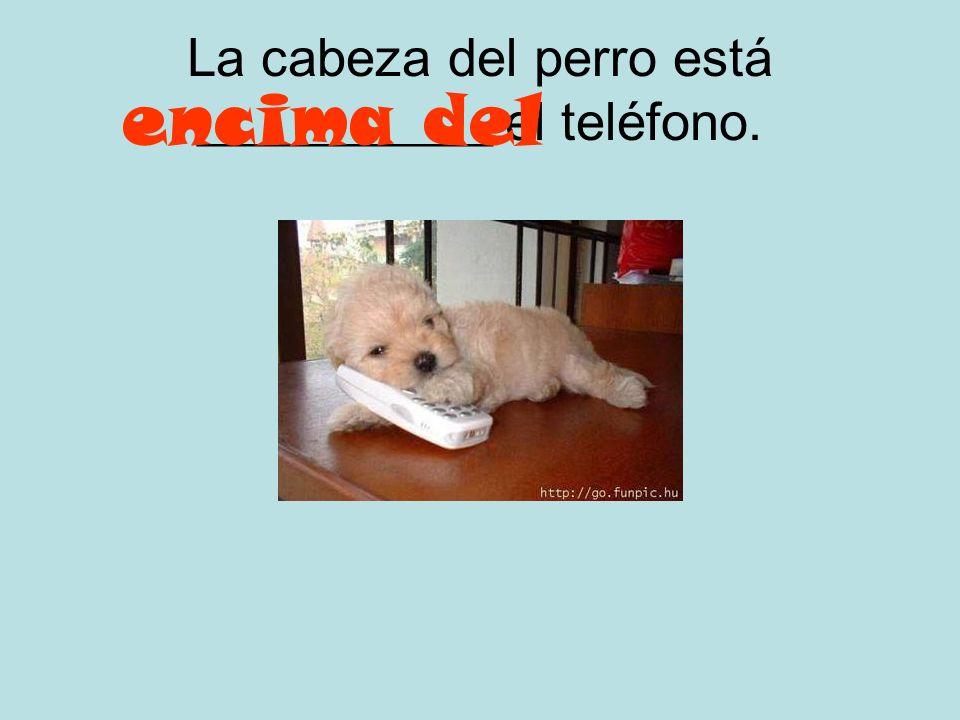 La cabeza del perro está ___________ el teléfono.