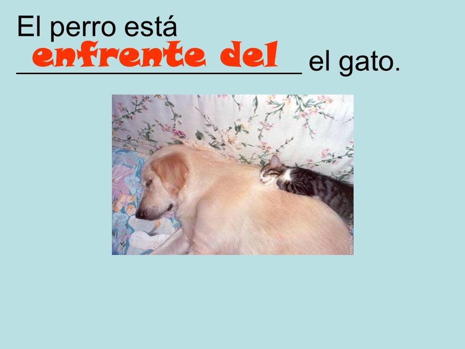 El perro está ____________________ el gato.
