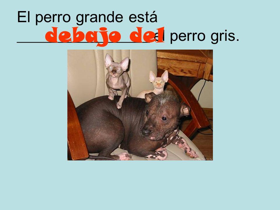 El perro grande está _________________ el perro gris.