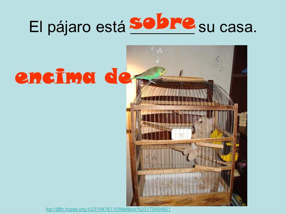 El pájaro está ________ su casa.