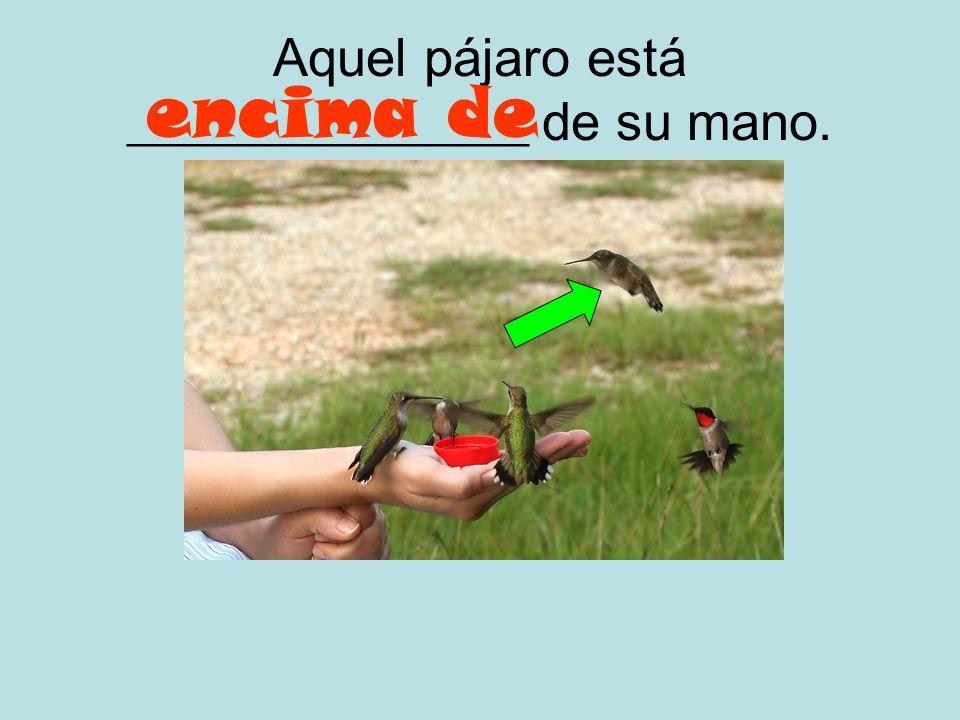 Aquel pájaro está _______________ de su mano.