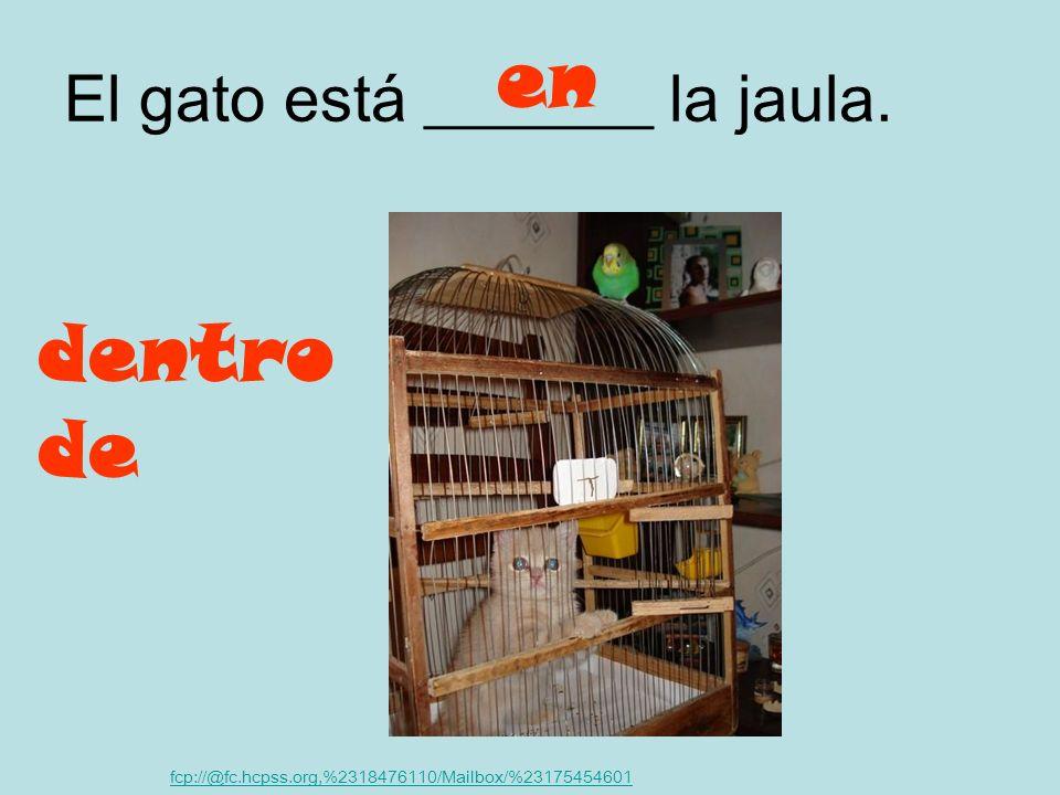 El gato está _______ la jaula.