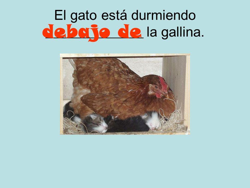 El gato está durmiendo ______________ la gallina.