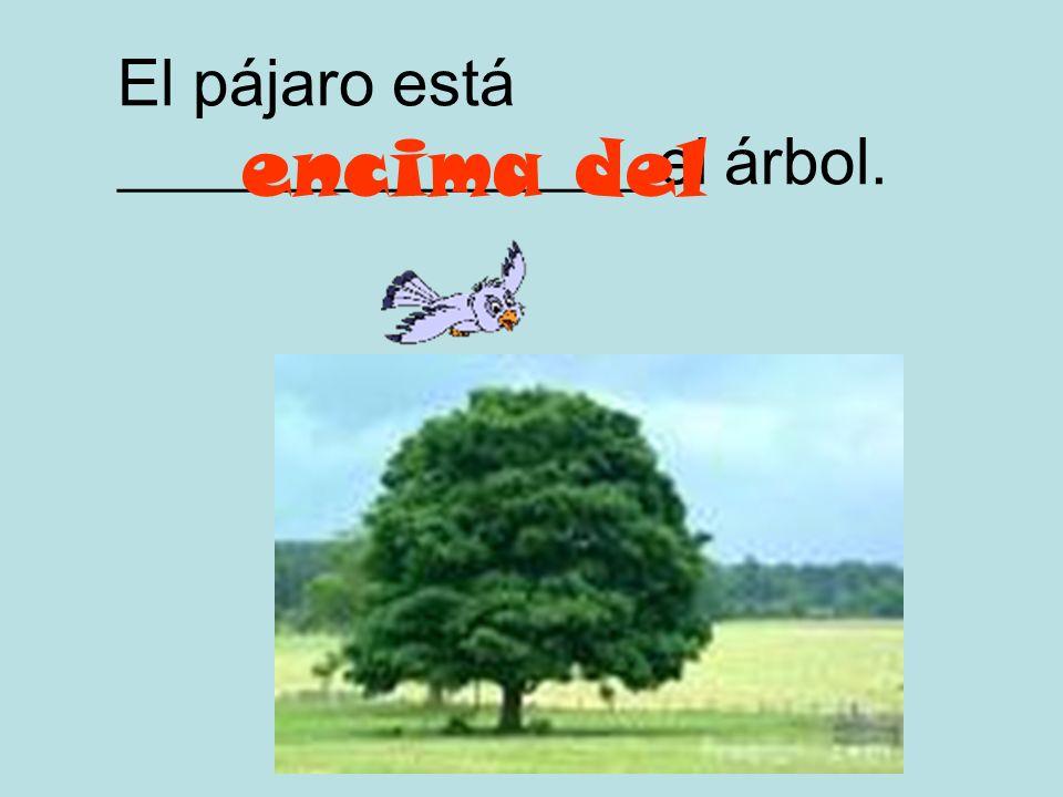 El pájaro está ________________ el árbol.