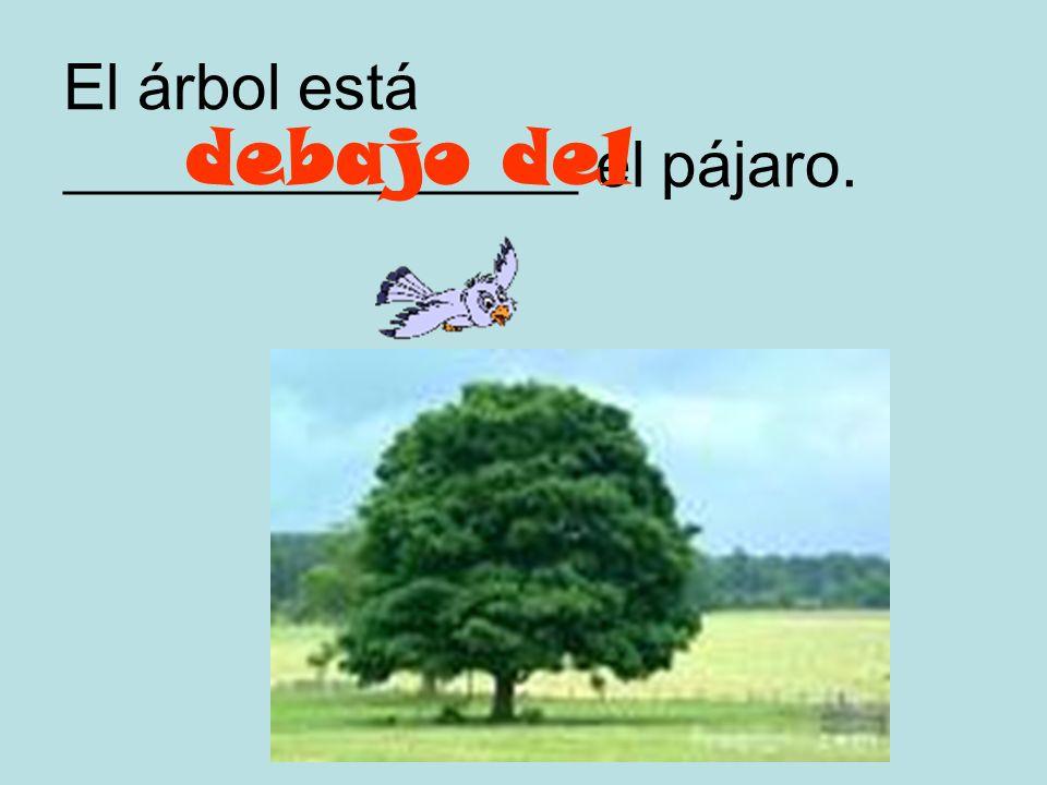 El árbol está ________________ el pájaro.