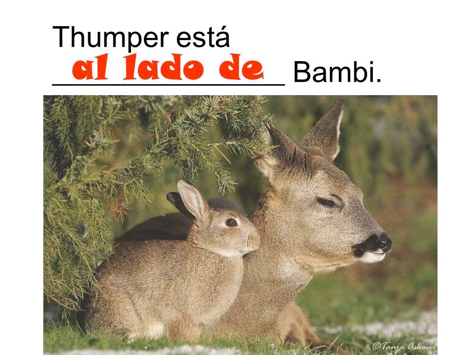 Thumper está ________________ Bambi.