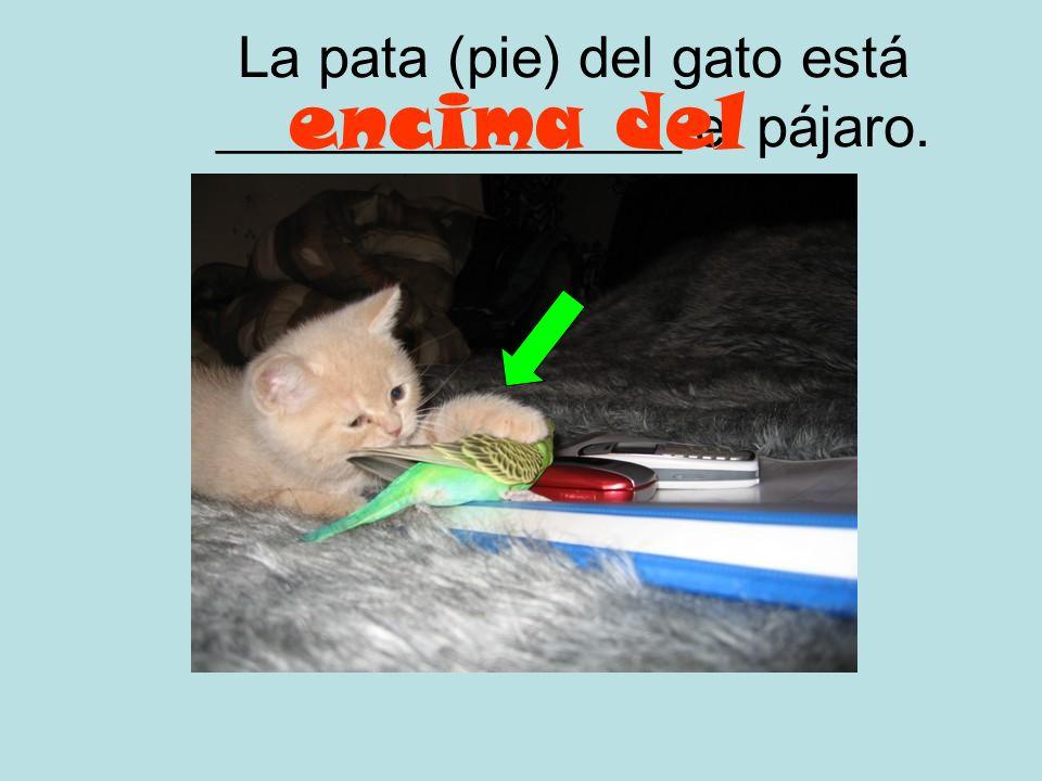 La pata (pie) del gato está ________________ el pájaro.