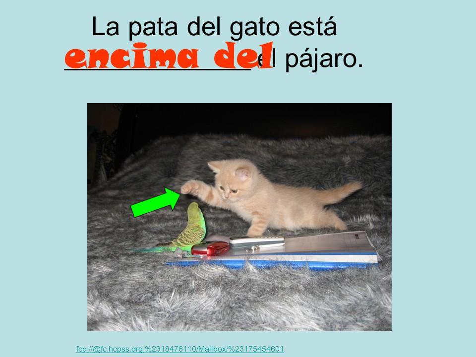La pata del gato está ______________ el pájaro.