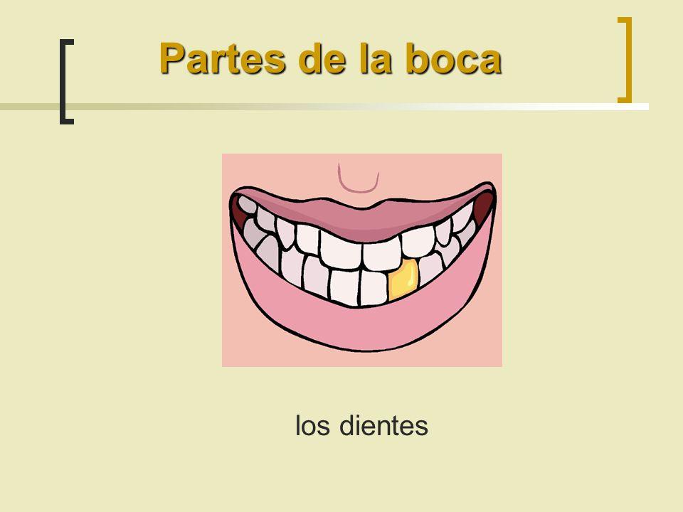 Partes de la boca los dientes