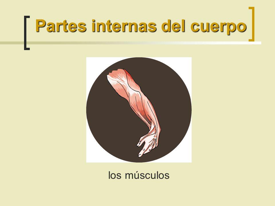 Partes internas del cuerpo