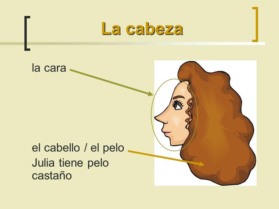 La cabeza la cara el cabello / el pelo Julia tiene pelo castaño