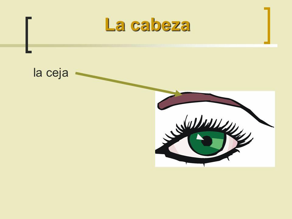 La cabeza la ceja