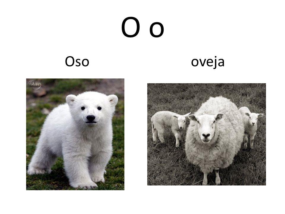 O o Oso oveja