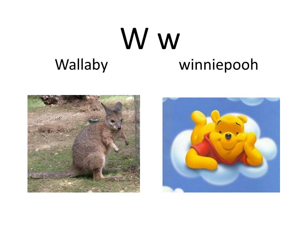 W w Wallaby winniepooh