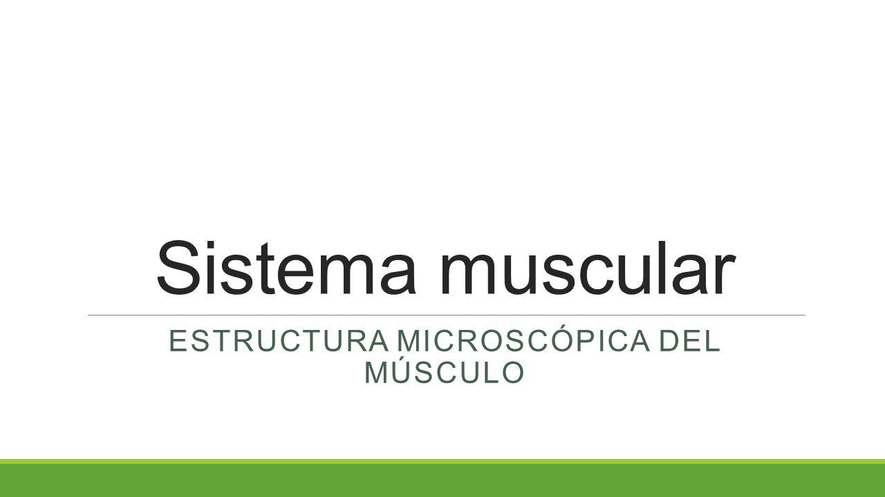 Estructura microscópica del músculo - ppt video online descargar