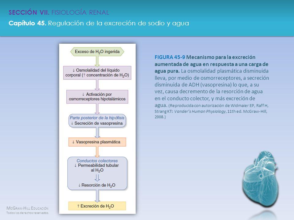 FIGURA 45-9 Mecanismo para la excreción aumentada de agua en respuesta a una carga de agua pura.