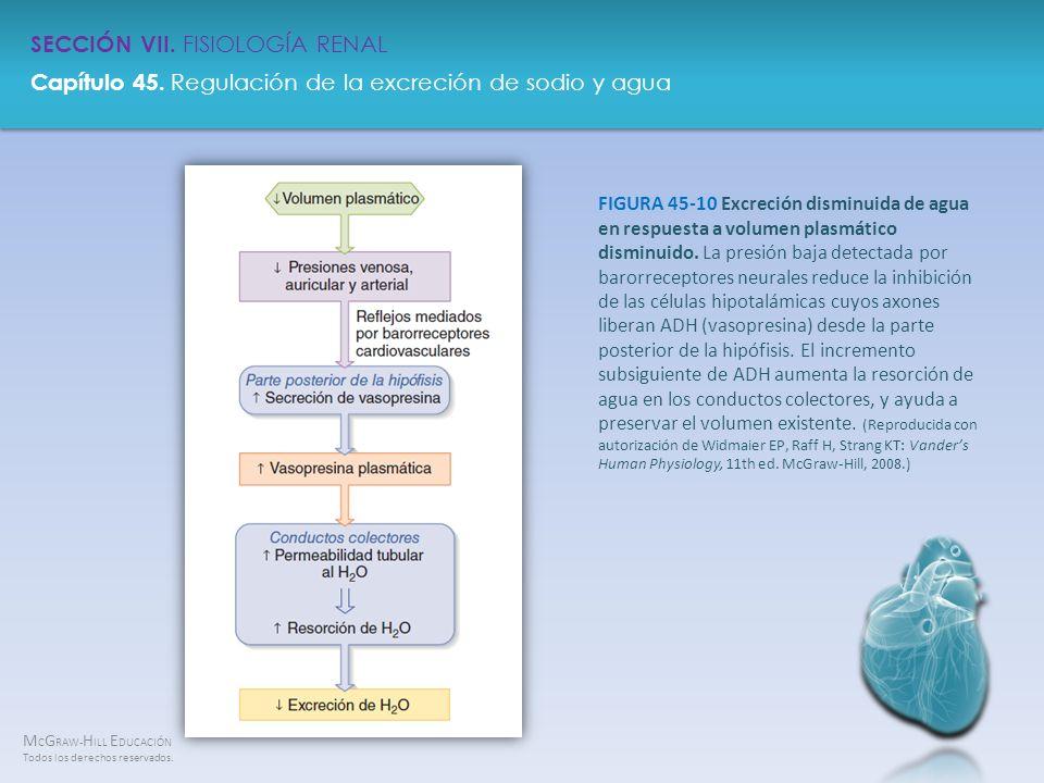FIGURA 45-10 Excreción disminuida de agua en respuesta a volumen plasmático disminuido.