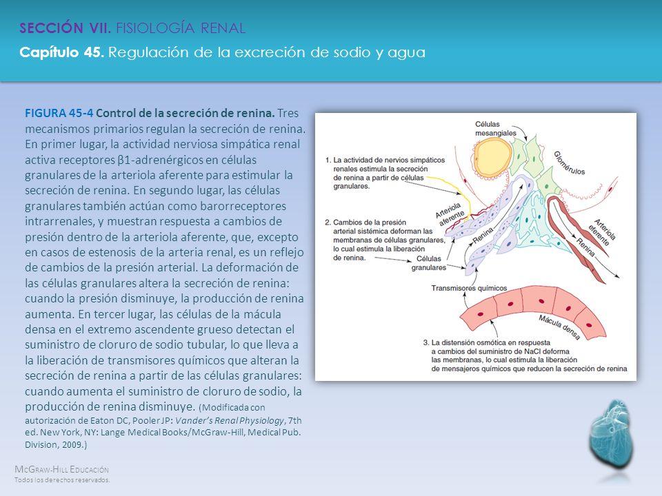 FIGURA 45-4 Control de la secreción de renina