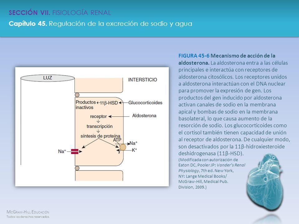 FIGURA 45-6 Mecanismo de acción de la aldosterona