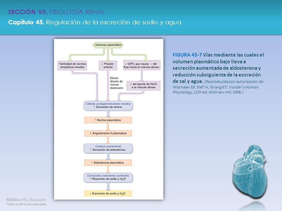 FIGURA 45-7 Vías mediante las cuales el volumen plasmático bajo lleva a secreción aumentada de aldosterona y reducción subsiguiente de la excreción de sal y agua.