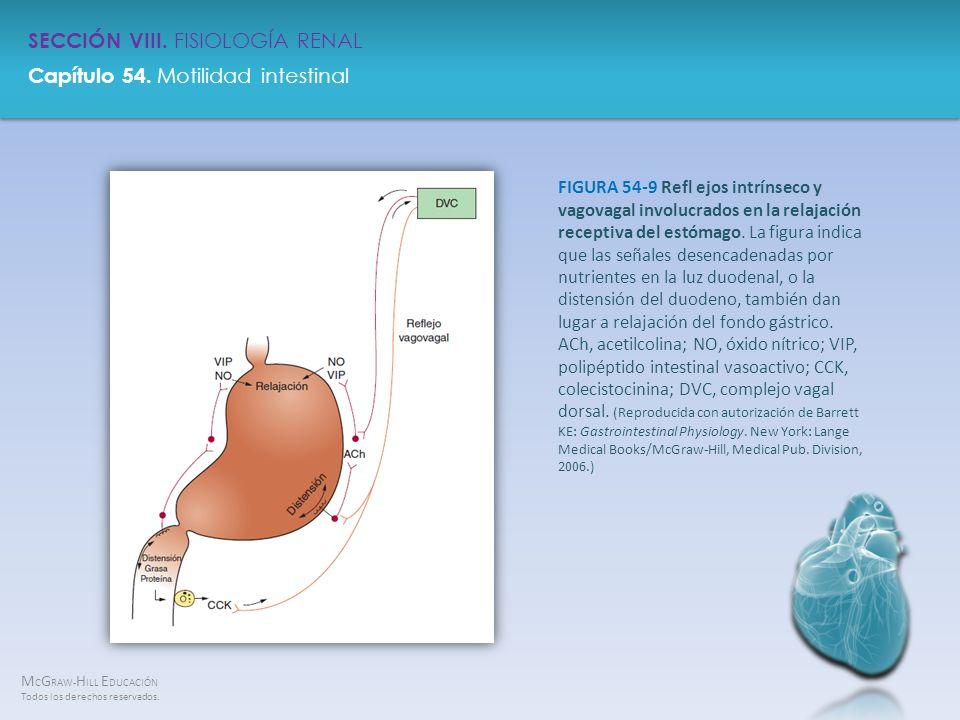 FIGURA 54-9 Refl ejos intrínseco y vagovagal involucrados en la relajación receptiva del estómago.