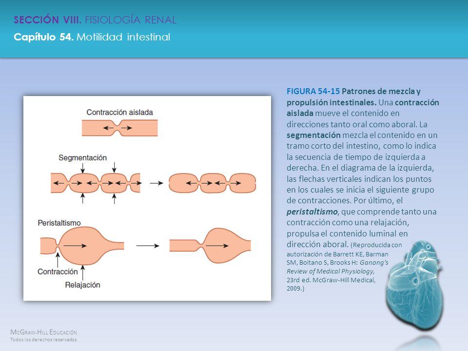 FIGURA 54-15 Patrones de mezcla y propulsión intestinales