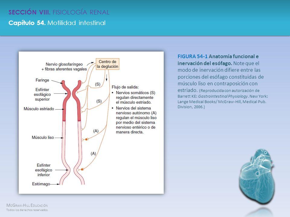 FIGURA 54-1 Anatomía funcional e inervación del esófago