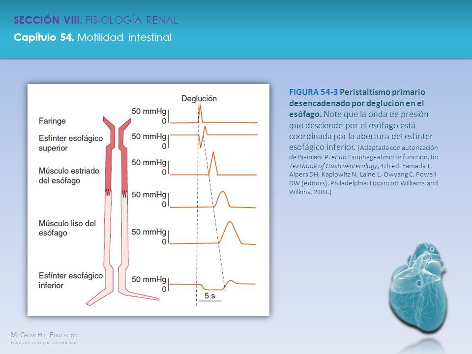 FIGURA 54-3 Peristaltismo primario desencadenado por deglución en el esófago.