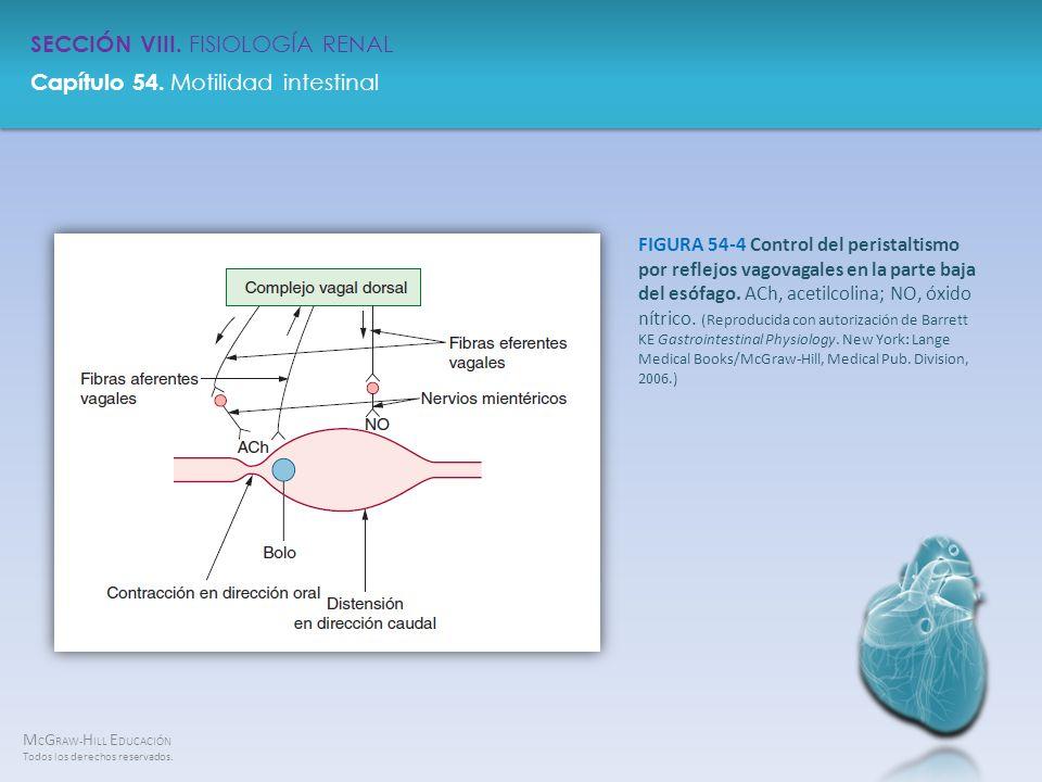 FIGURA 54-4 Control del peristaltismo por reflejos vagovagales en la parte baja del esófago.