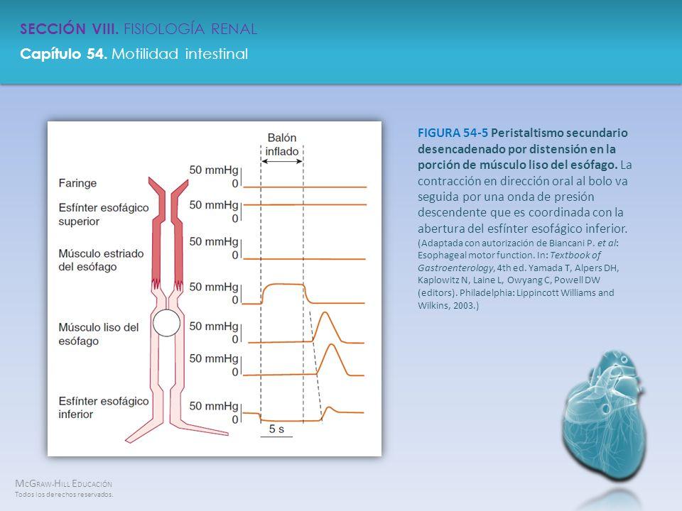 FIGURA 54-5 Peristaltismo secundario desencadenado por distensión en la porción de músculo liso del esófago.