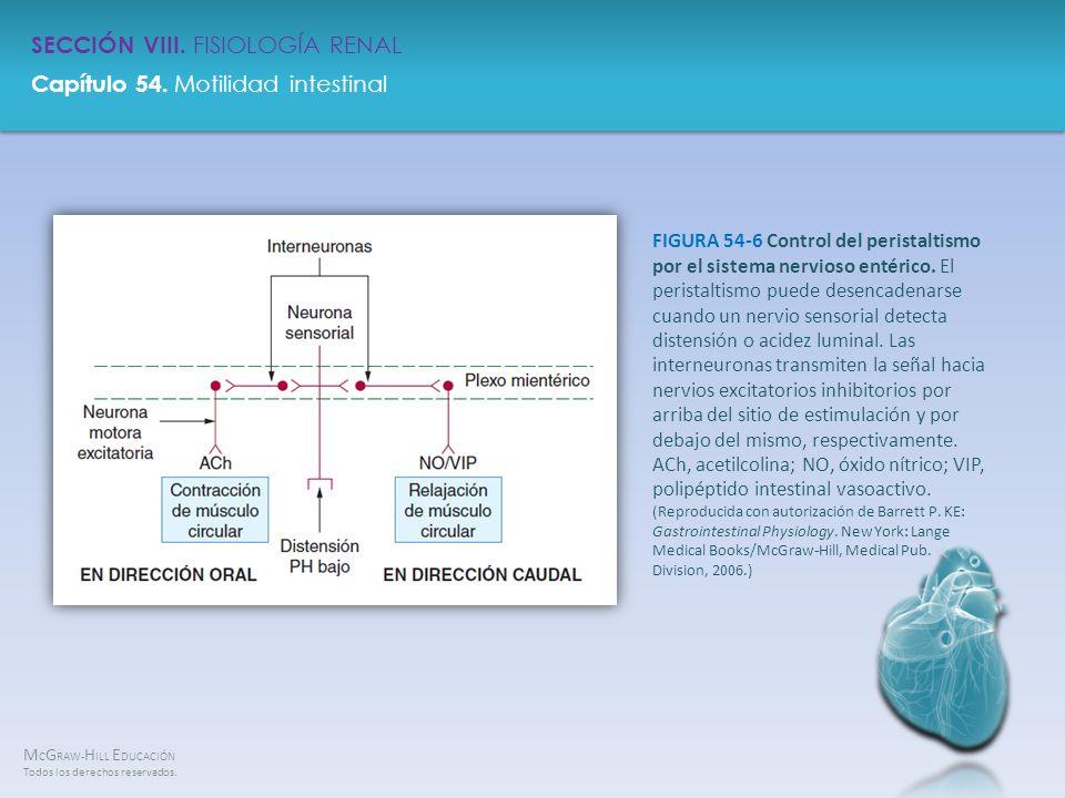 FIGURA 54-6 Control del peristaltismo por el sistema nervioso entérico