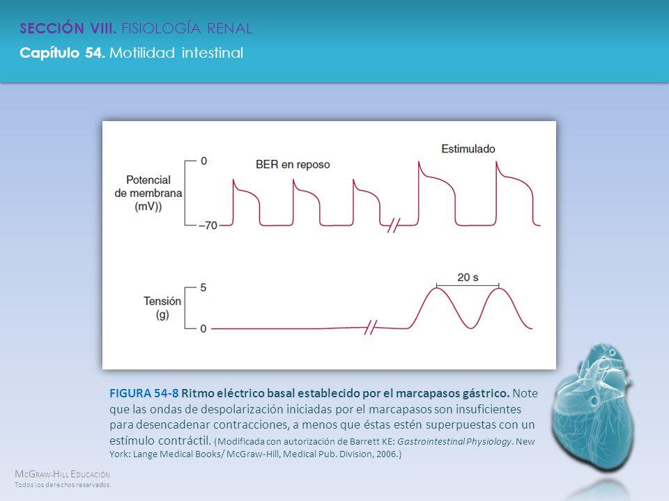 FIGURA 54-8 Ritmo eléctrico basal establecido por el marcapasos gástrico.