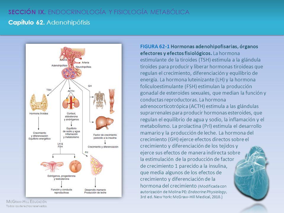 FIGURA 62-1 Hormonas adenohipofisarias, órganos efectores y efectos fisiológicos.