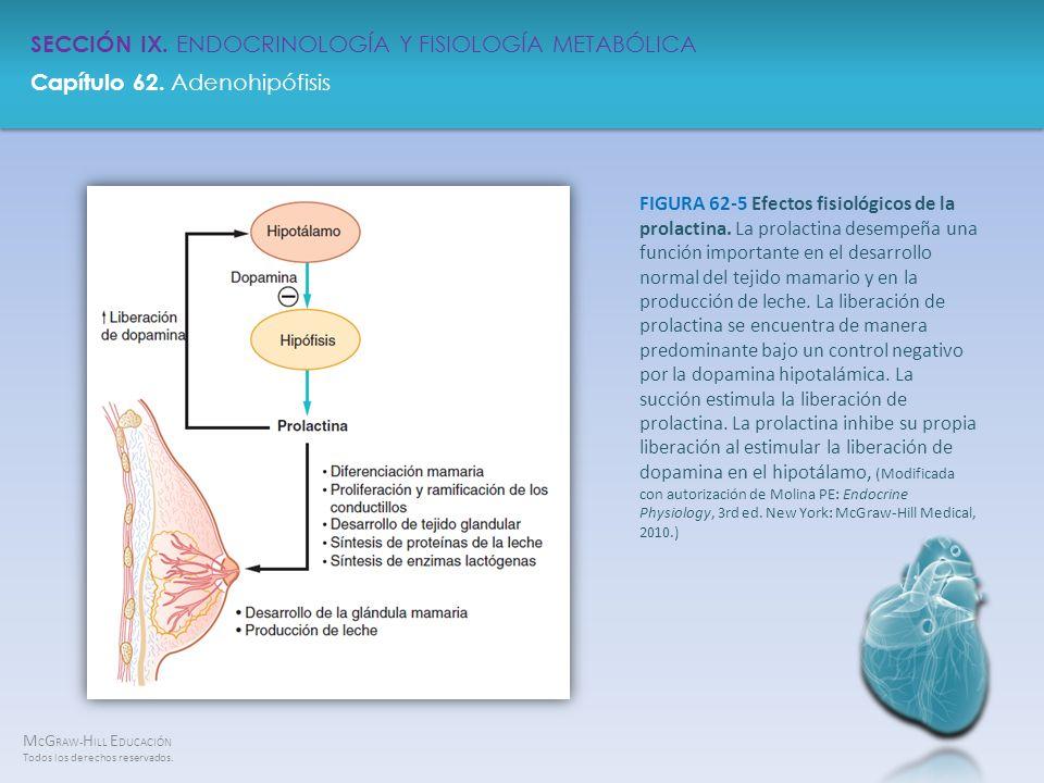 FIGURA 62-5 Efectos fisiológicos de la prolactina