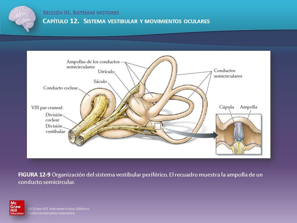 FIGURA 12-9 Organización del sistema vestibular periférico