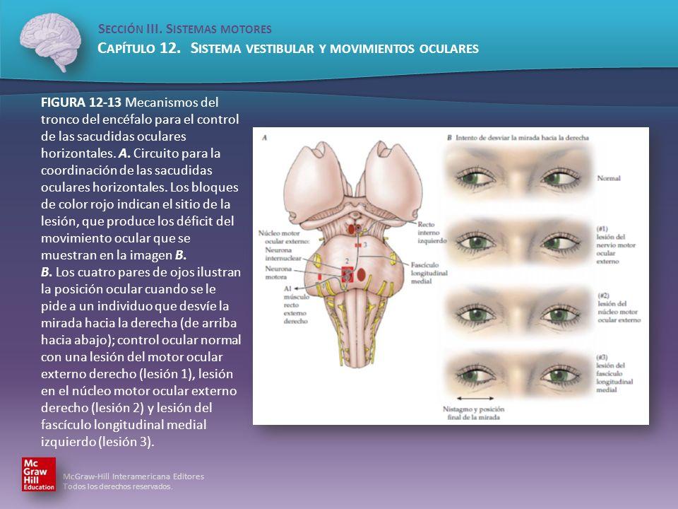 FIGURA 12-13 Mecanismos del tronco del encéfalo para el control de las sacudidas oculares horizontales.