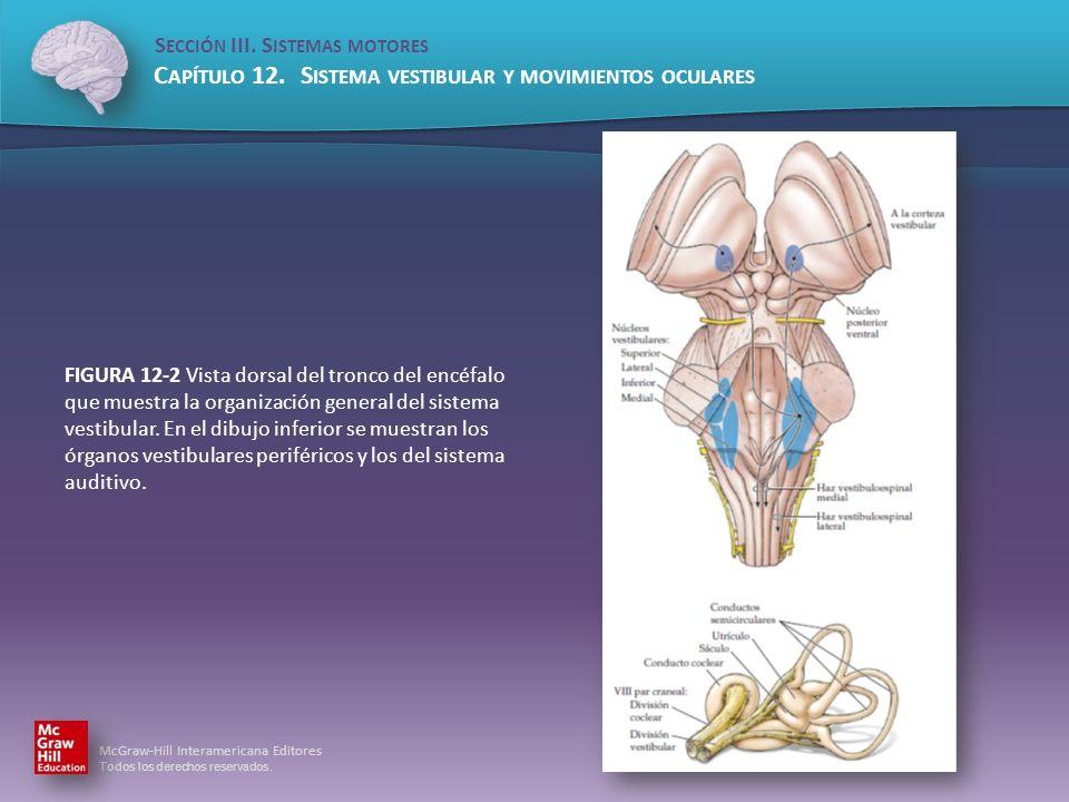 FIGURA 12-2 Vista dorsal del tronco del encéfalo que muestra la organización general del sistema vestibular.