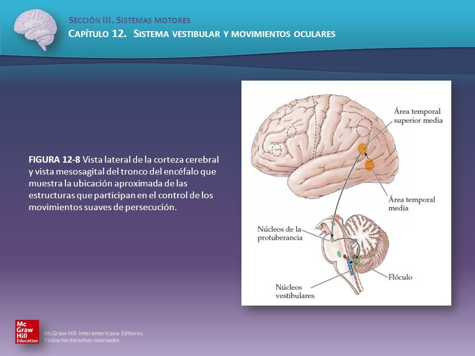 FIGURA 12-8 Vista lateral de la corteza cerebral y vista mesosagital del tronco del encéfalo que muestra la ubicación aproximada de las estructuras que participan en el control de los movimientos suaves de persecución.