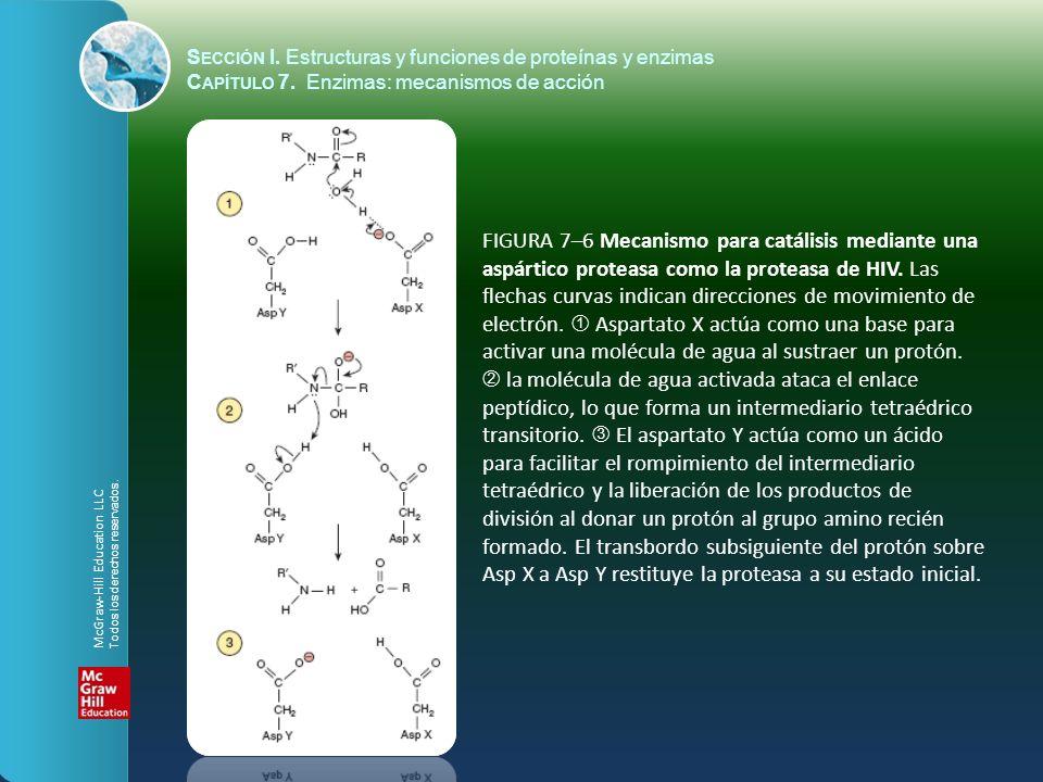 FIGURA 7–6 Mecanismo para catálisis mediante una