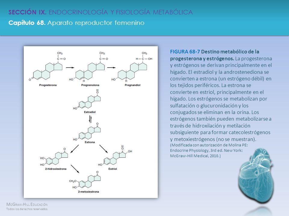 FIGURA 68-7 Destino metabólico de la progesterona y estrógenos