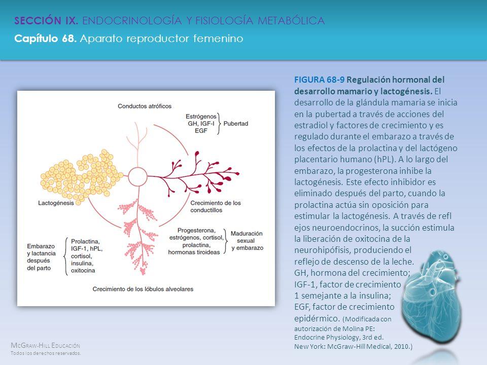 FIGURA 68-9 Regulación hormonal del desarrollo mamario y lactogénesis