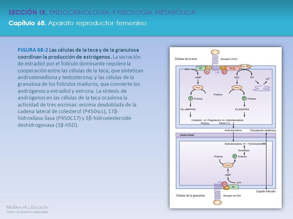 FIGURA 68-2 Las células de la teca y de la granulosa coordinan la producción de estrógenos.