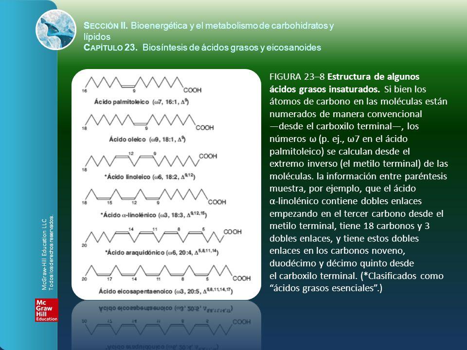 Sección II. Bioenergética y el metabolismo de carbohidratos y lípidos